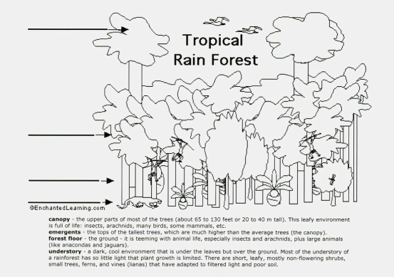 Layers Of The Rainforest Worksheet Worksheets For School - Studioxcess